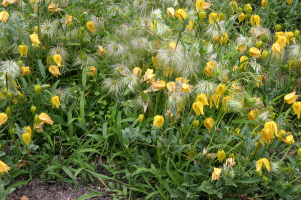Mon jardin ..... - Page 2 Img_3420