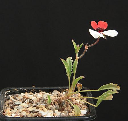 La Foire aux Plantules de la SAJA Img_8310