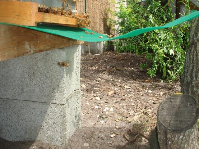 HELP!!!!une ruche sur un toit...........la saga! - Page 7 Abeill12