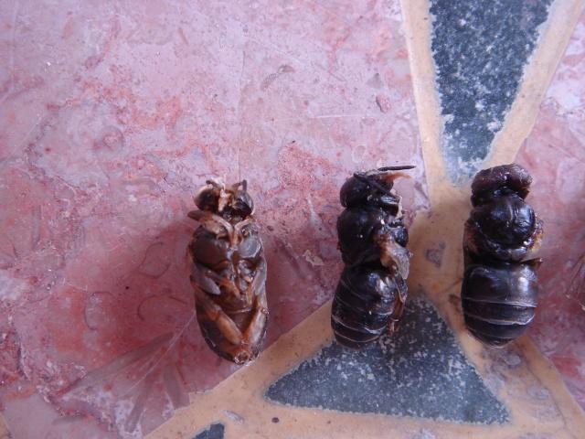 HELP!!!!une ruche sur un toit...........la saga! - Page 7 Maladi11