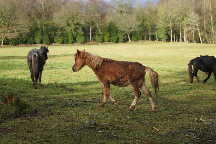 Welsh A pp de 2010 18074010