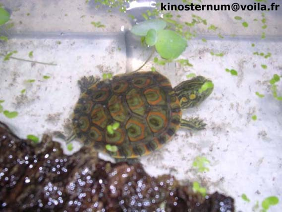 mes tortues (BK) - Page 2 56750410