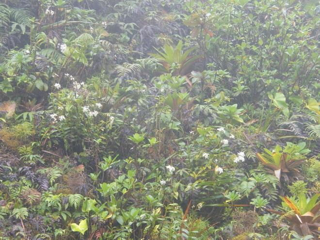 Orchidées de Guadeloupe Dscf9710