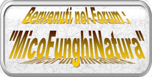 Forum/Sito di Micologia:  MICOFUNGHINATURA