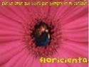 Flor & Fede wallpapers Floraz10