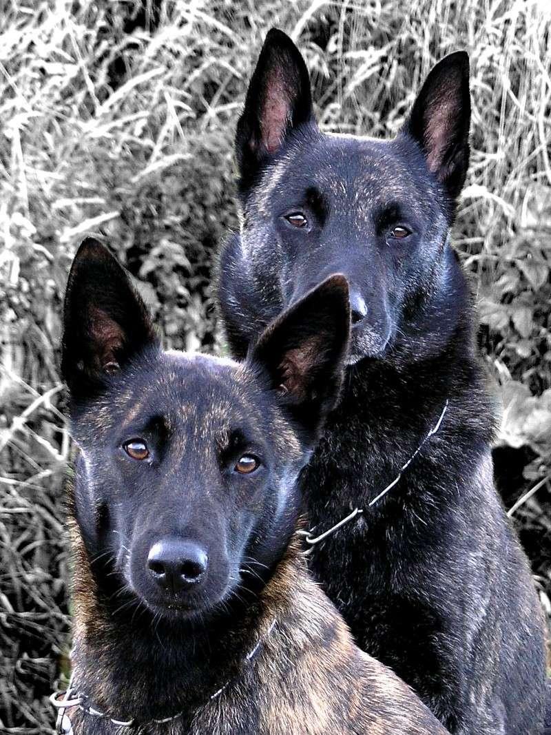 Mes deux compagnons à moi ... Vinyba10