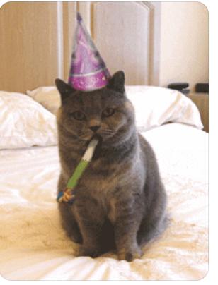 La Fée Clochette pour son anniversaire Chat_210