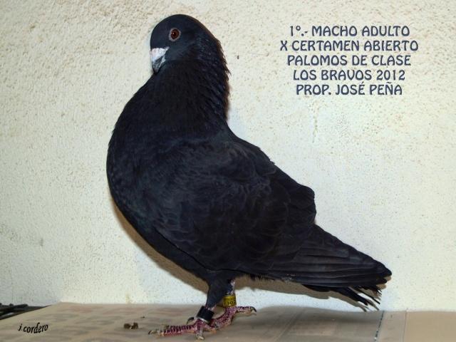 RESULTADOS X CERTAMEN ABIERTO 2012 LOS BRAVOS _c080510