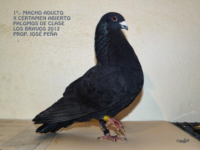 RESULTADOS X CERTAMEN ABIERTO 2012 LOS BRAVOS _c080511