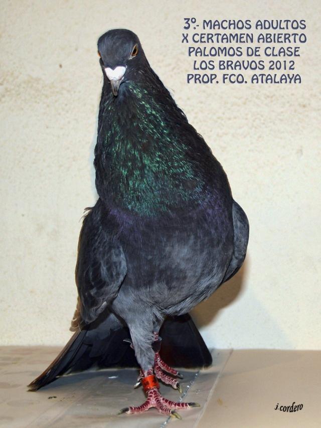 RESULTADOS X CERTAMEN ABIERTO 2012 LOS BRAVOS _c080512