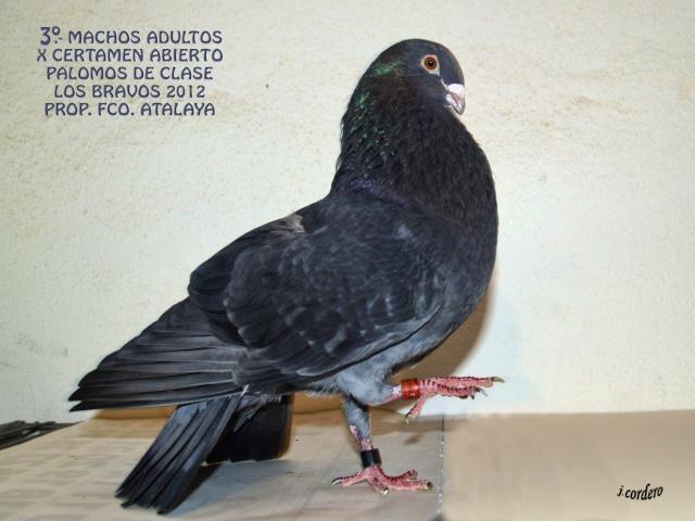 RESULTADOS X CERTAMEN ABIERTO 2012 LOS BRAVOS _c080514