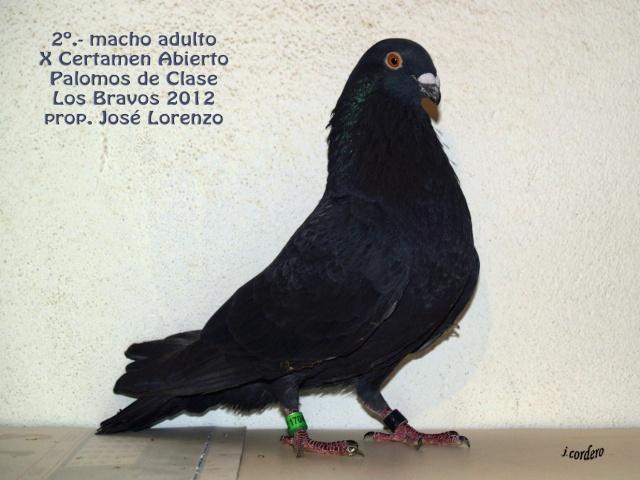 RESULTADOS X CERTAMEN ABIERTO 2012 LOS BRAVOS _c080515