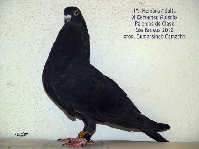 RESULTADOS X CERTAMEN ABIERTO 2012 LOS BRAVOS _c080519
