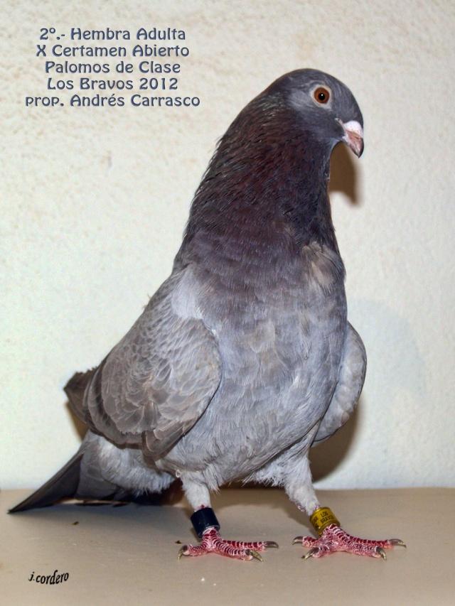 RESULTADOS X CERTAMEN ABIERTO 2012 LOS BRAVOS _c080520