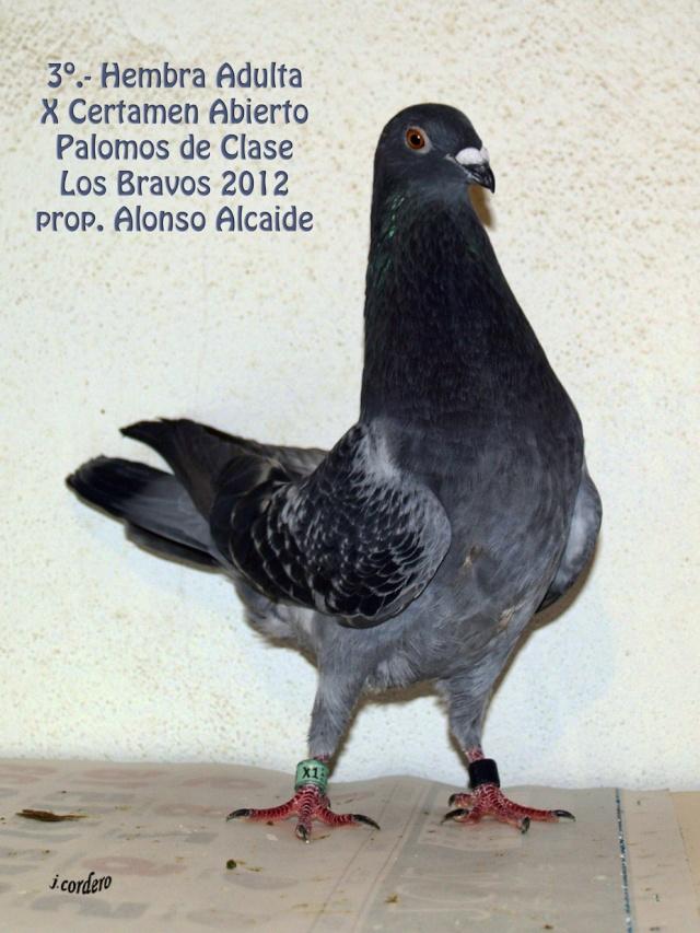 RESULTADOS X CERTAMEN ABIERTO 2012 LOS BRAVOS _c080523