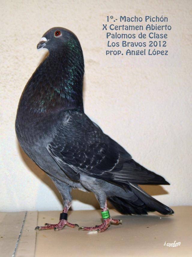 RESULTADOS X CERTAMEN ABIERTO 2012 LOS BRAVOS _c080526