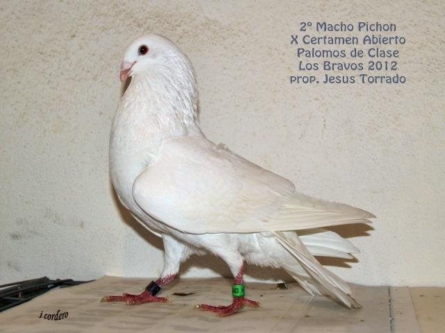 RESULTADOS X CERTAMEN ABIERTO 2012 LOS BRAVOS _c080528