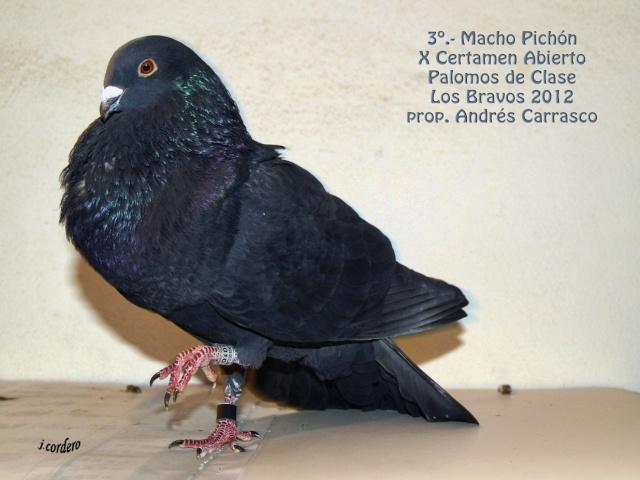 RESULTADOS X CERTAMEN ABIERTO 2012 LOS BRAVOS _c080530