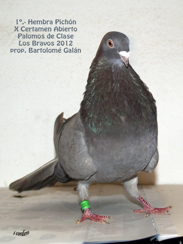 RESULTADOS X CERTAMEN ABIERTO 2012 LOS BRAVOS _c080531