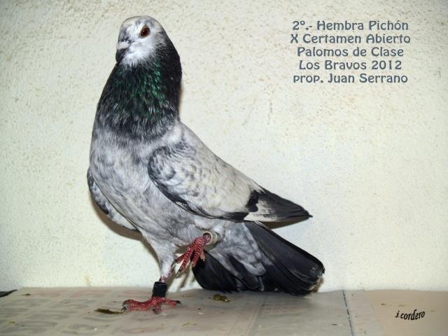 RESULTADOS X CERTAMEN ABIERTO 2012 LOS BRAVOS _c080535