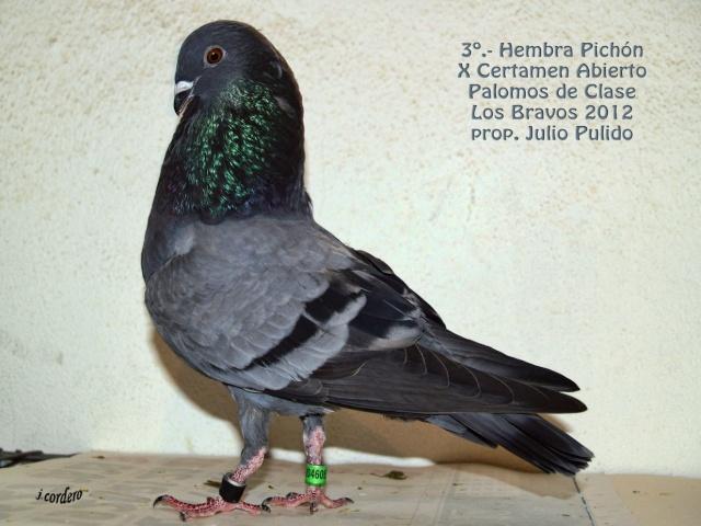 RESULTADOS X CERTAMEN ABIERTO 2012 LOS BRAVOS _c080610