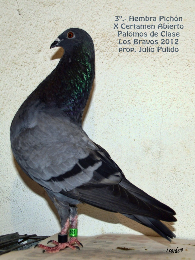 RESULTADOS X CERTAMEN ABIERTO 2012 LOS BRAVOS _c080611