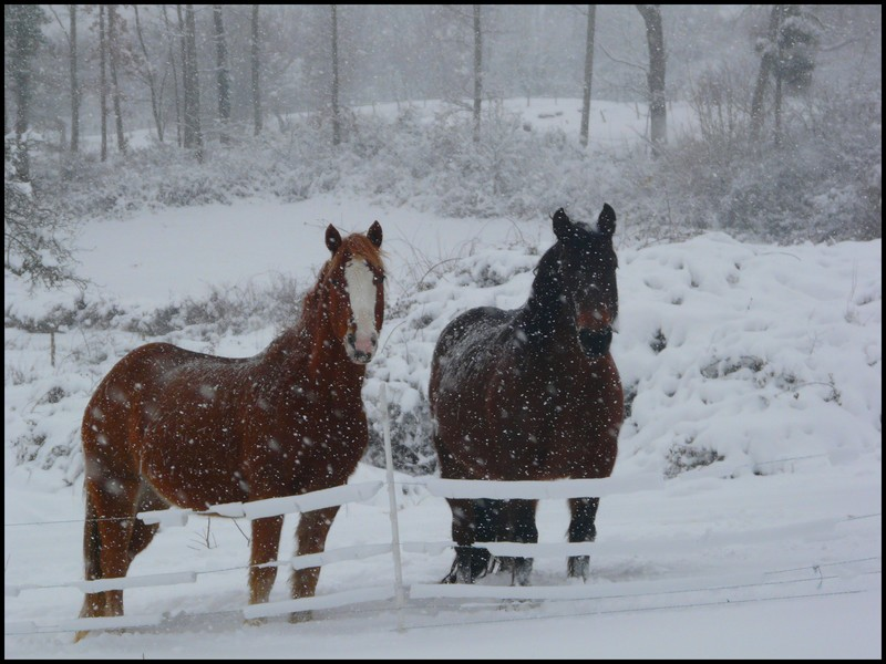Concours Photos Décembre : Le Cheval et la Neige P1080110