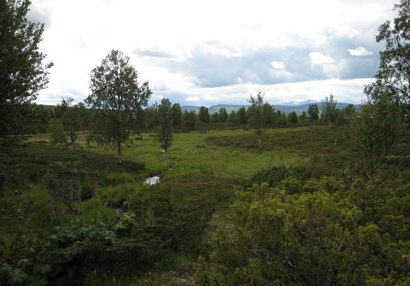 Gymnadenia s.l. en Scandinavie, juillet 2008 Img_1611