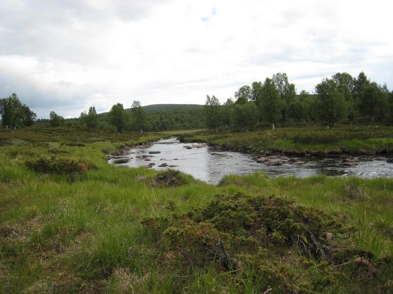 Gymnadenia s.l. en Scandinavie, juillet 2008 Img_1612