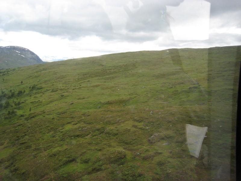 Gymnadenia s.l. en Scandinavie, juillet 2008 Img_1615
