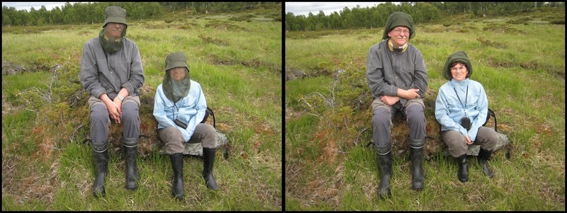 Gymnadenia s.l. en Scandinavie, juillet 2008 Stefan11