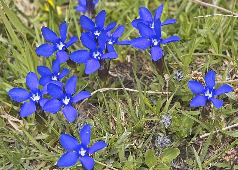 La flore en Haute Tarentaise - Page 2 Printa10
