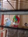 Bienvenue à la nouvelle perruche ! Dscf3414