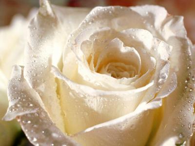 """La délicatesse, chapitres 47 à 70 : """"C'est l'amour en fuite, l'amour en fuite"""".  55652210"""