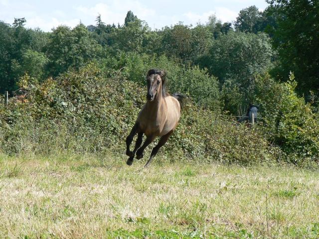 "Concours : ""cheval au galop"" GAGNANTE : TItâne - Page 2 P1070212"
