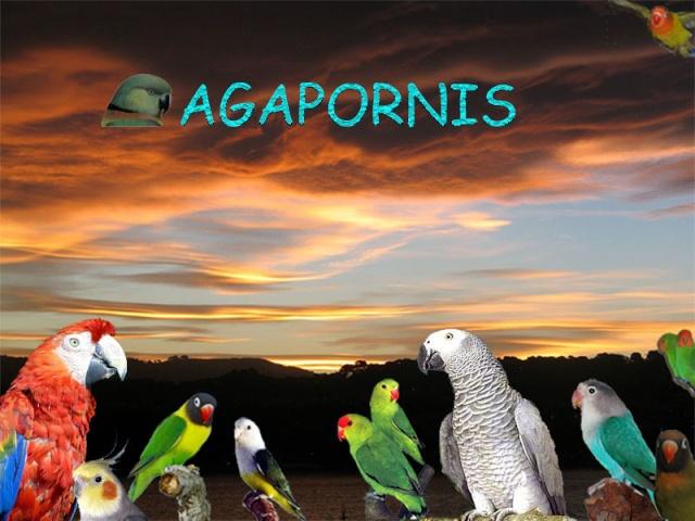 Forum gratis : tutto sul mondo dei pappagalli Logo-d13