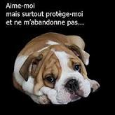 Forum des chiens Vignet11