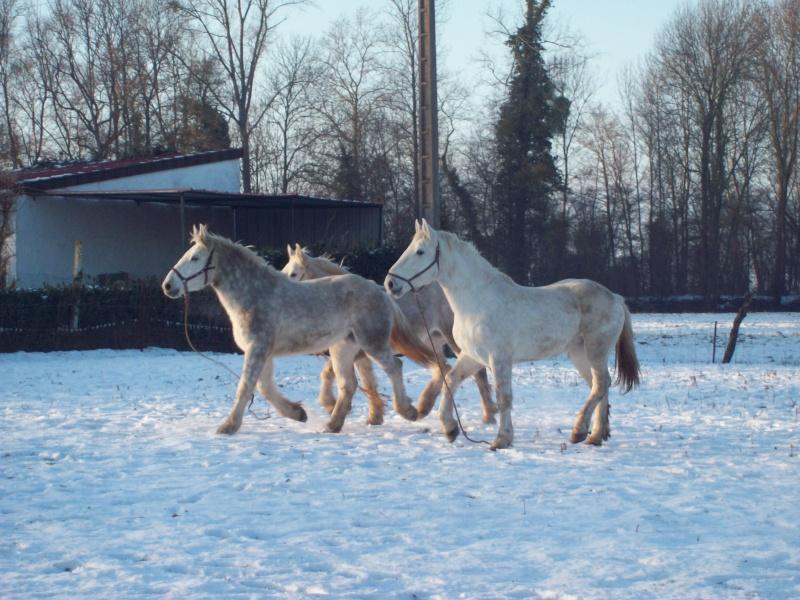 Concours Photos Décembre : Le Cheval et la Neige 100_3310