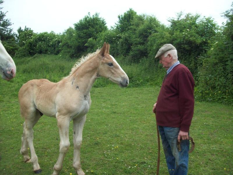 Concours Photo Juillet : Quand Cheval rime avec Poésie... 101_0610