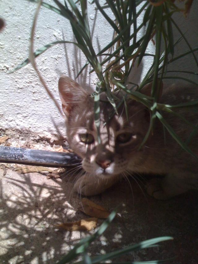 Νεογέννητα γατάκια Vol.2 Img_0117