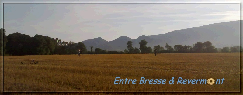 entre Bresse & Revermont - Portail 25_07_10
