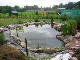 le bassin  Dscn0629