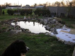 le bassin  Dscn1322