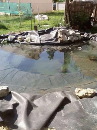 le bassin  Sp_a0121