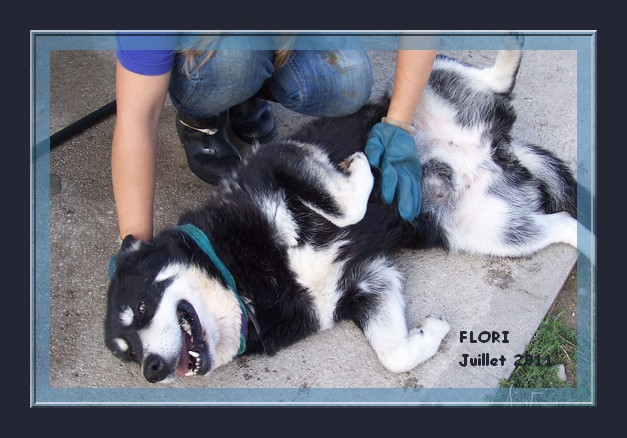 FLORI x husky (f) APAL née en 2002.CHERCHE ADOPTANT SUISSE ASSO ESPAGNE 12-09-10