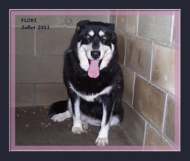 FLORI x husky (f) APAL née en 2002.CHERCHE ADOPTANT SUISSE ASSO ESPAGNE 12-09-11