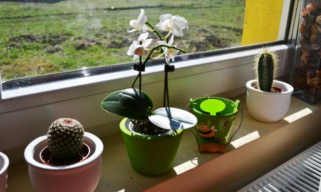 florile din apartament/gradina - Pagina 8 Dsc_0149