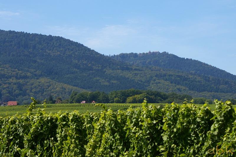 Le Mont Sainte-Odile Imgp2723