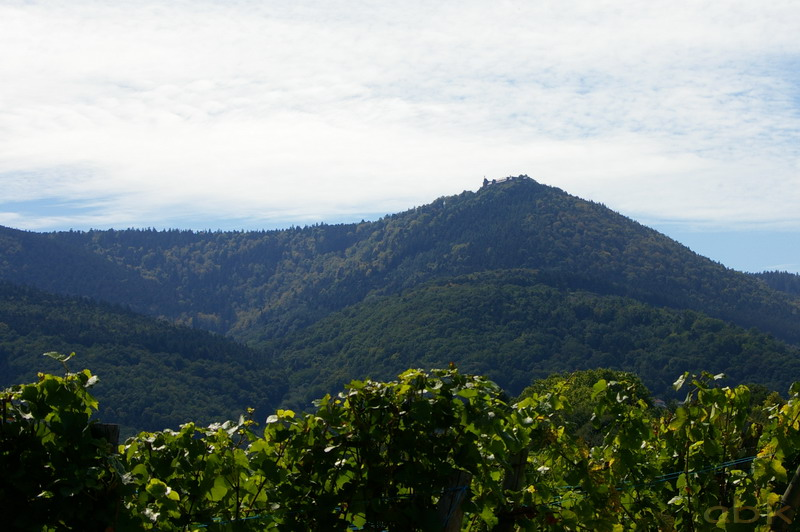 Le Mont Sainte-Odile Imgp2727