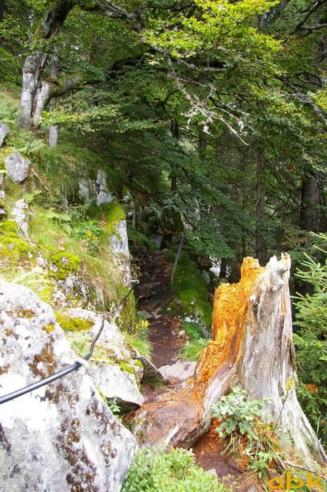 Le Tanet - Hirschteine - Lac Vert Le_tan15